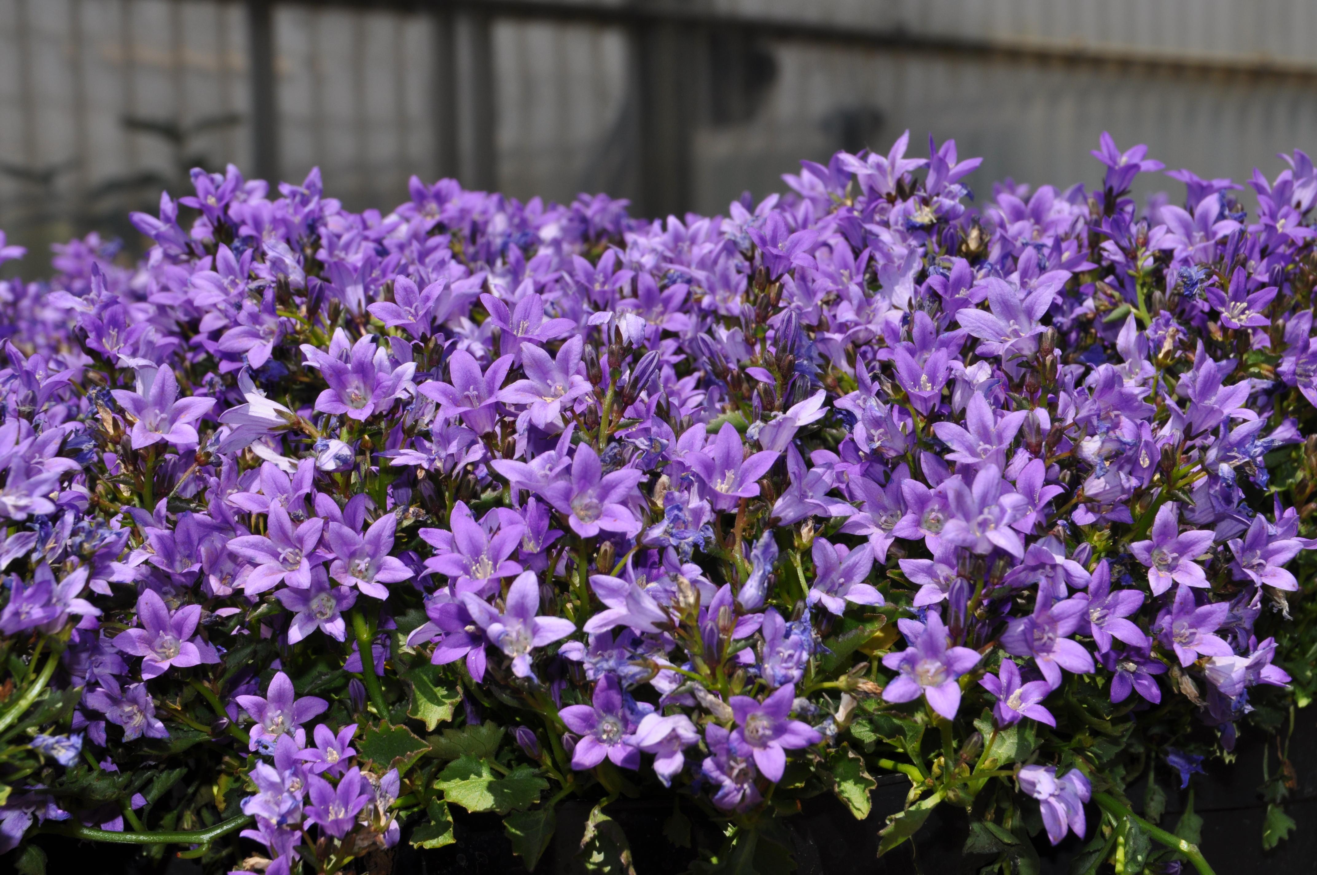 Piante da orto e giardino - Piante esotiche da giardino ...
