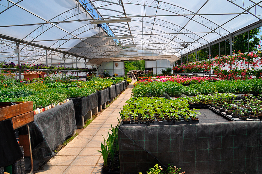 piante da orto e giardino