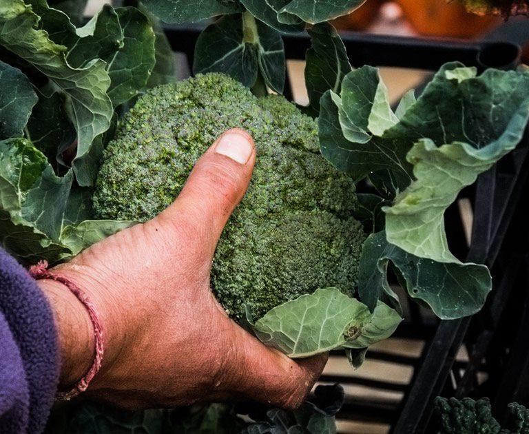L 39 orto di vaggio azienda agricola ortoflorovivaista for Piante da orto vendita online