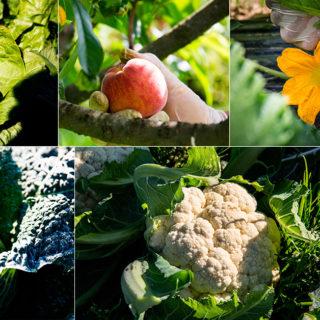 Ortaggi e frutta di stagione
